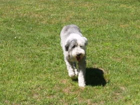 oes in off leash field
