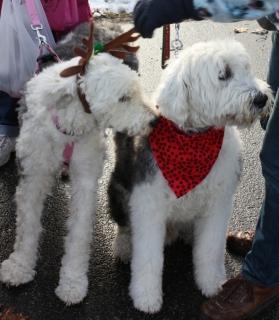 Salem Holiday Parade 2014