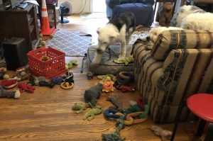 corby playing with all the toys